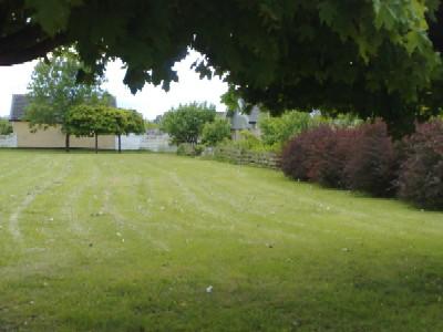 Bland gräs o buskar