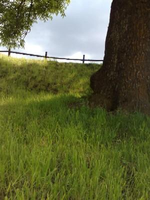 Gräs och mulen himmel
