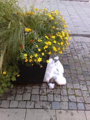 blommor och snö i augusti