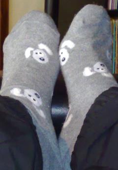 fötter med hundar på strumporna