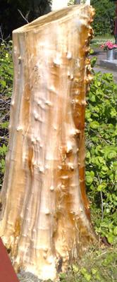 Ett lustigt träd