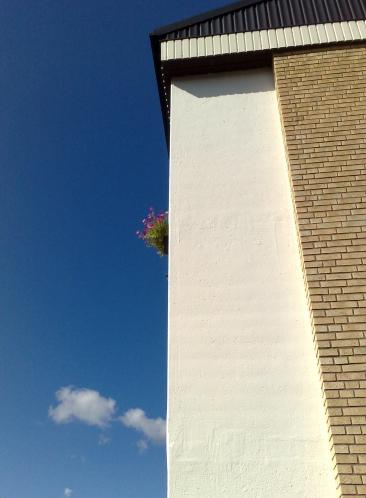 sista balkongblommorna