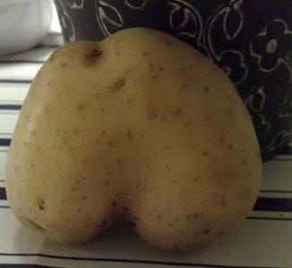 potatisstjärt