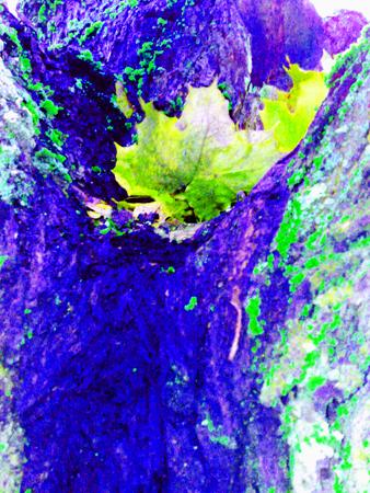 lila träd med gult löv