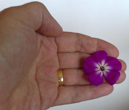 En blomma till håret