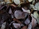 döda löv