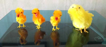 En kvartett kycklingar på skivspelaren