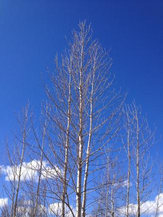 Blå himmel o bara lite moln