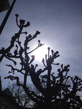 Spöklika träd