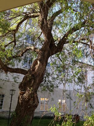 Pilträd