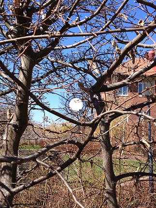 Solen i en trädgård