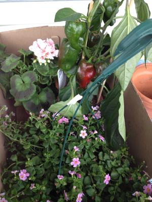 En låda blommor o grönt