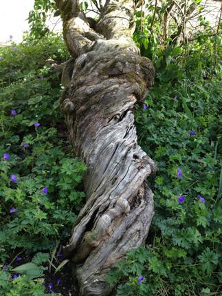 Konstigt träd Fadimes plats