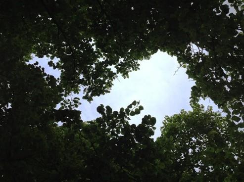 Himmel mellan grenarna