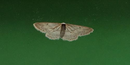 Fjäril på utsidan av rutan