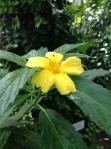 Gul blomma med vattendroppar