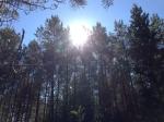 Sol över trädtoppar