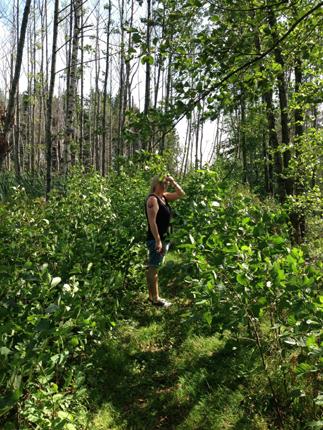 Anna på oröjd stig i skogen