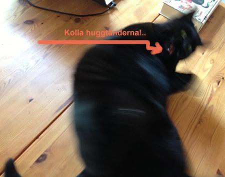 Bibbi Katt med huggtand