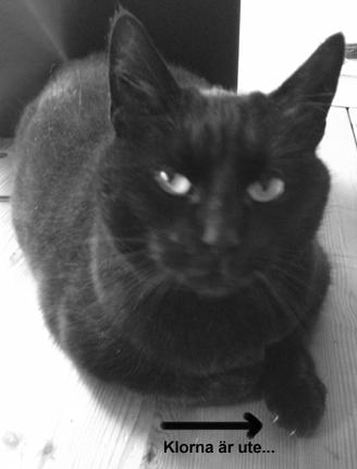 Bibbi Katt med klor