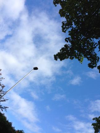 Himmel lykta träd