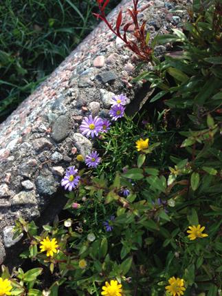Blommor i betongkruka