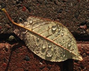 Blött löv med droppar på marken