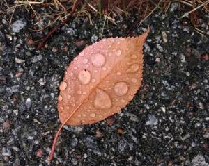 Löv med droppar på asfalten