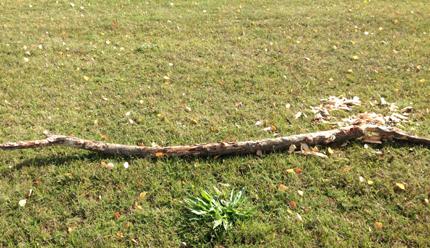 Avskalad gren på marken