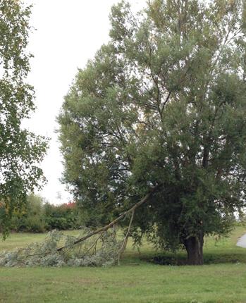 Trädgren som är av