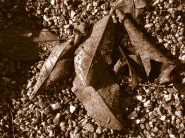 Löv-sepia