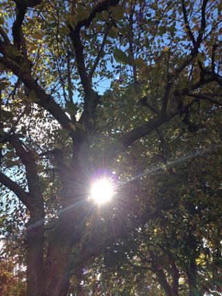 Solen genom höstgrenverk