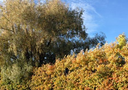 Träd och häck höst