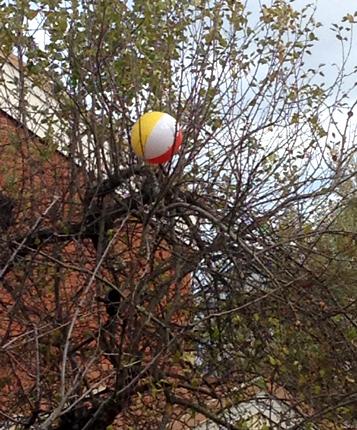 Badboll i ett träd