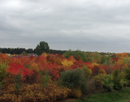 Höstbuskar i olika färger
