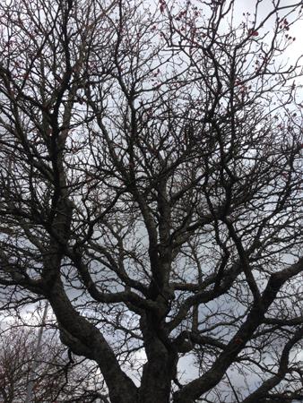 Lövlöst träd