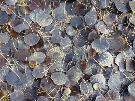 Bruna löv på marken