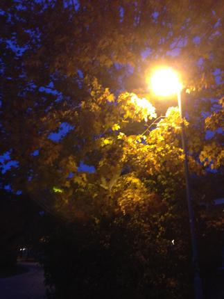 Gatlykta och höstträd