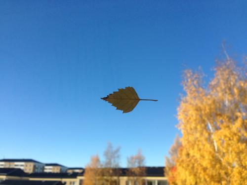 Löv på fönstret