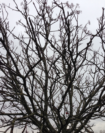 Lövfritt träd
