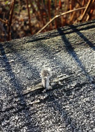 Frost på trästaket