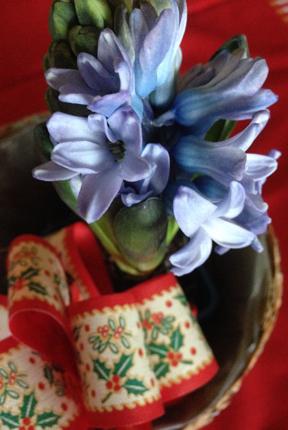 Blå hyacint
