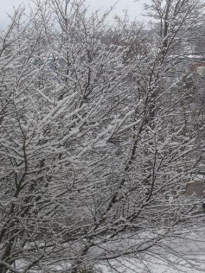 Snöigt träd utanför jobbet