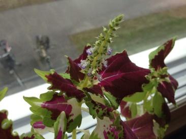 Blommande palettblad