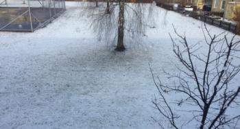 Snö på baksidan