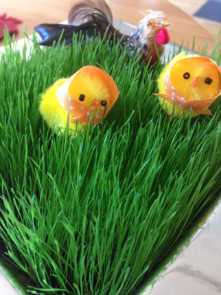 Små kycklingar i gräs