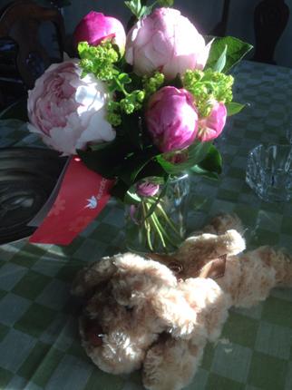 Pioner och hund från fru Klon