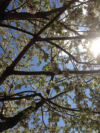 Solen genom träden