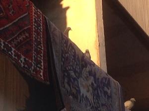 Duvor på mattor på balkong