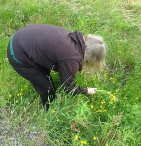 Anna plockar blommor